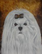 White Maltese Originals - Maltese face by Laura Bolle