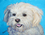 White Maltese Framed Prints - Maltese in Sunlight Framed Print by Dottie Dracos