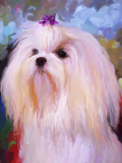 Maltese Dog Framed Prints - Maltese Portrait Framed Print by Jai Johnson