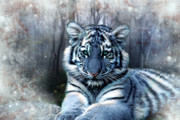 Julie L Hoddinott - Maltese Tiger