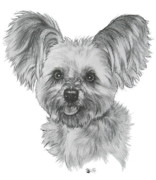 Designer Dogs - Malti-Pom by Barbara Keith