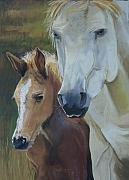 Wild Horses Pastels - Mamas Boy by Heather Coen