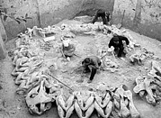 Palaeolithic Prints - Mammoth Bone Hut Excavation, Ukraine Print by Ria Novosti