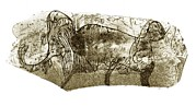 Magdalenian Prints - Mammoth, Prehistoric Bone Art Print by Sheila Terry