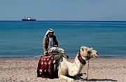 Camel Photo Prints - Man with Camel at Red Sea Print by Carl Purcell