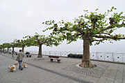 During Art - Man with dog walking on empty promenade with trees by Matthias Hauser