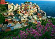 Cinque Terre Posters - Manarola from above Poster by Inge Johnsson