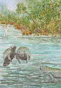 Fed Originals - Manatee by Grace Ashcraft