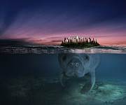 Photomanipulation Digital Art Prints - Manatee Print by Leito R