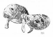 Stippling Framed Prints - Manatee Framed Print by Robert Morin