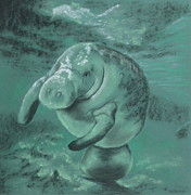 Animal Pastels - Manatee  by Sherri Strikwerda
