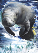 Whale Mixed Media - Manatees by Anthony Burks