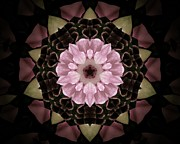 Mandala Photos - Mandala Peaceful Petals by Rene Crystal