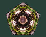 Mandala Photos - Mandala Vines On Clapboard by Rene Crystal