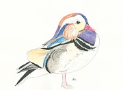 Waterfowl Mixed Media Framed Prints - Mandarin Duck Framed Print by Kiana Gonzalez