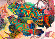 Tropical Fish Drawings Posters - Mandarin FIsh Poster by Patricia Merewether