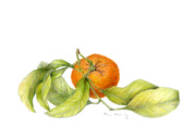 Farmers Market Drawings Prints - Mandarin Orange Print by Fran Henig
