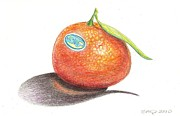 Produce Drawings Prints - Mandarin Orange Print by Sean Paradise