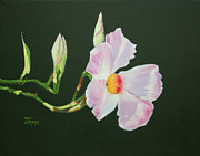 Vine Paintings - Mandevilla Reaching Out by Jimmie Bartlett