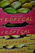 Mango Posters - Mangoes For Sale Poster by Sandy Moulder