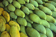 Mango Metal Prints - Mangoes Sold At A Market Metal Print by Todd Gipstein