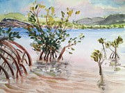 Puerto Rico Paintings - Mangrove by Barbara Richert