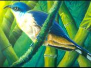 Ross Daniel Paintings - Mangrove cuckoo by Ross Daniel