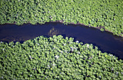 Mangrove River Print by Alexis Rosenfeld