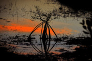 Everglades Digital Art - Mangrove Silhouette by David Lee Thompson