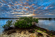 Mangroves Prints - Mangrove Sky Print by Debra and Dave Vanderlaan