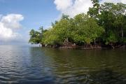 Mangrove Trees Photos - Mangroves A The Edge Of A Small Island by Darlyne A. Murawski