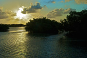 Florida Keys Photos - Mangroves Infront Of The Sun by Jesse Leventhal