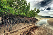 Peaceful Scene Framed Prints - Mangroves Framed Print by MotHaiBaPhoto Prints