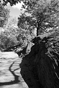 Tree Roots Digital Art Prints - MANHATTEN SHIST in BLACK AND WHITE Print by Rob Hans