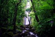 Manoa Falls Prints - Manoa Falls Print by Kevin Smith