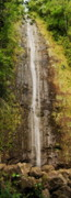 Manoa Falls Prints - Manoa Falls Print by Michael Peychich