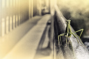 Antiquated Framed Prints - Mantis on a tube - Antiquated Framed Print by Alex AG