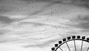 Black And White Birds Prints - Many Birds Flying Over Giant Wheel In Berlin Print by Image by Ivo Berg (Crazy-Ivory)