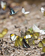 Rail Digital Art Originals - Many butterfly on the flow in the wild by Anek Suwannaphoom