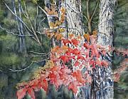 Fall Leaves Posters - Maple and Birch -New England  Fall Poster by June Conte  Pryor