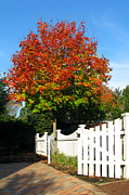 Autumn Colors Posters - Maple and Picket Fence Poster by Olivier Le Queinec