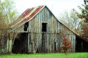 Country Dirt Roads Prints - Maple Barn Print by Lisa Moore