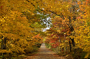 Duluth Art - Maple Lane by Whispering Feather Gallery