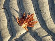 Marilyn Wilson - Maple Leaf Forever