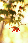 Focus On Foreground Art - Maple Leaf by Higrace Photo