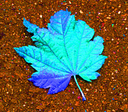 Leaf Photos - Maple Leaf on Pavement by Marie Jamieson
