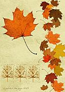 Earth Tone Prints - Maple Leaf Print by Pederbeck Arte Gruppe