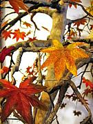 Nelbert  Flores - Maple on a Rock - view 4