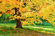 Maria Aiello - Maple Tree in Fall