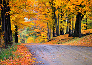 Country Dirt Roads Metal Prints - Maples of Rupert Vermont Metal Print by Thomas Schoeller